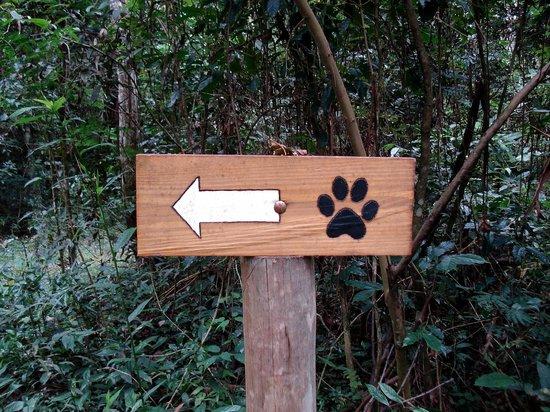 Avare, SP : cães por aqui