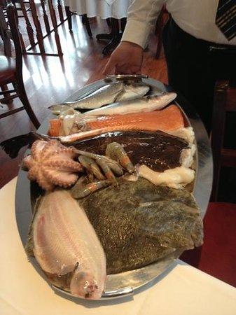 Capri: Fischauswahl