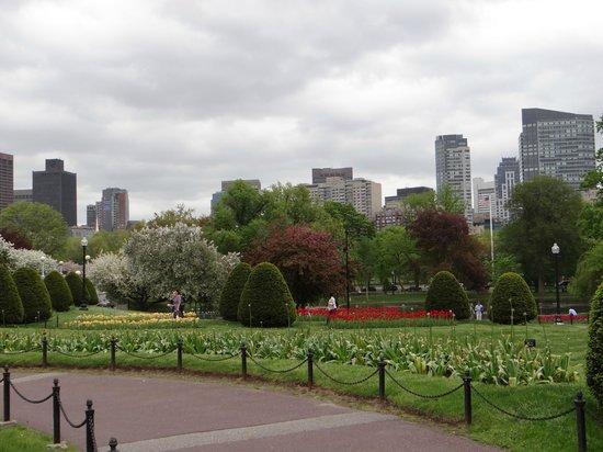 Cherry Blossom Picture Of Boston Public Garden Boston Tripadvisor