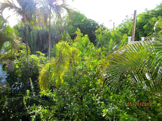 Key West Bed and Breakfast: Lush and tropical!