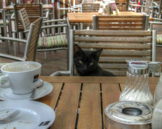 Winzerkeller-Restaurant-Meissen: and the cat made four ...