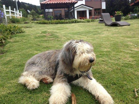 Altura Hotel: perro amoroso y jugueton