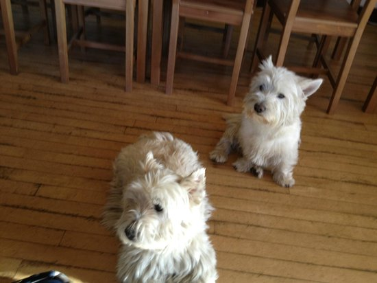 Colquhonnie Hotel: Westies at Colquhonnie House