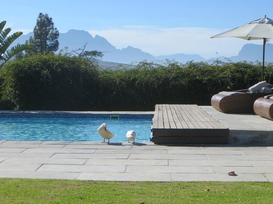 WedgeView Country House & Spa : Mooi zwembad