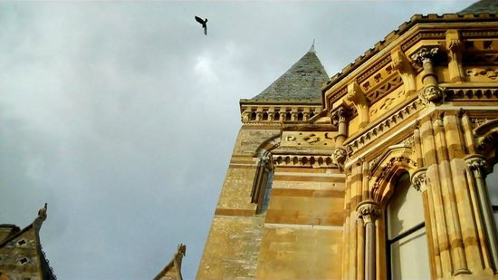 Ettington Park Hotel: Crows have a nest in the roof