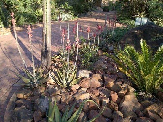 Ntshondwe Lodge: Aloes outside reception