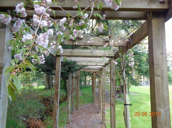 Tigh Na Bruach: garden blossoms