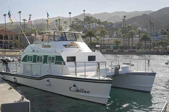 Our catch for dinner picture of afishinados charters for Catalina island fishing charters