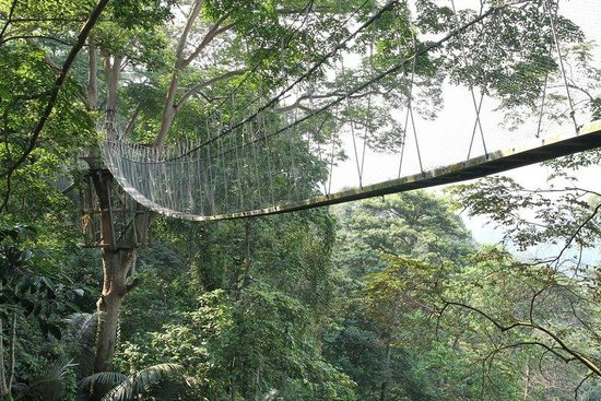 FRIM -Forest Research Institute of Malaysia Canopy walk & Canopy walk - Picture of FRIM -Forest Research Institute of ...