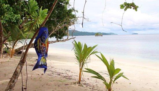 Raja Ampat Biodiversity Eco Resort: Biodiversity Beach