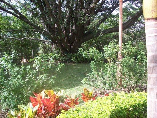 Ringle Resort Hotel & Spa: Mango Tree