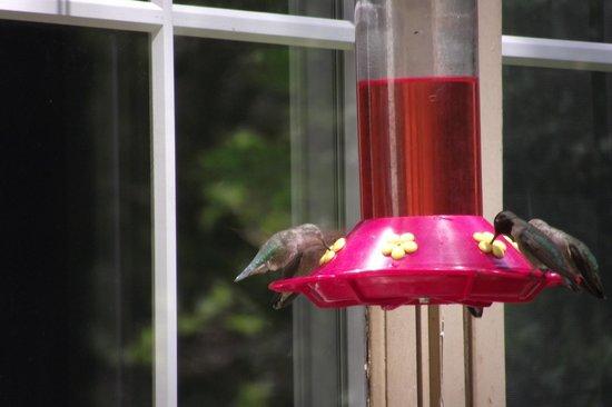 Highland House Bed & Breakfast: humming birds