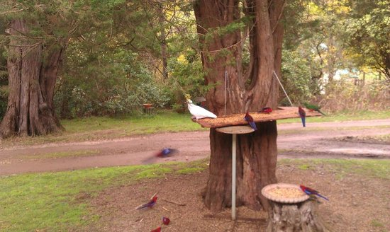 Strathvea Guest House B&B: Native birds feasting outside the dining room window