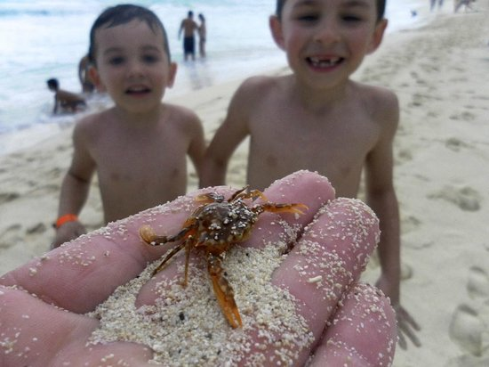 Crown Paradise Club Cancun: Petit crabe sur la plage