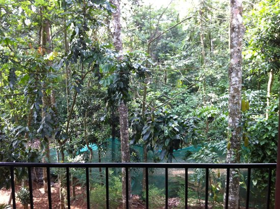Sumilayam Jungle View Homestay: Our view from the second floor balcony