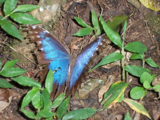 Corredores del Pacuare: Butterfly