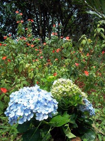 Corredores del Pacuare: Garden