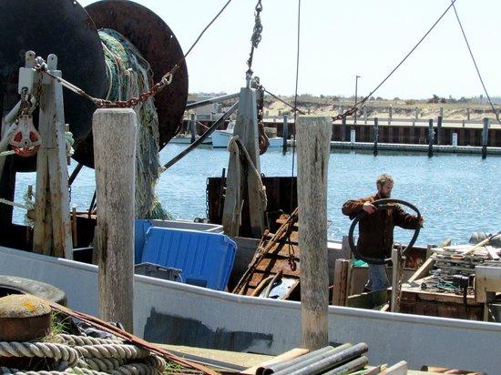 Menemsha Fish Market: Menemsha Habor
