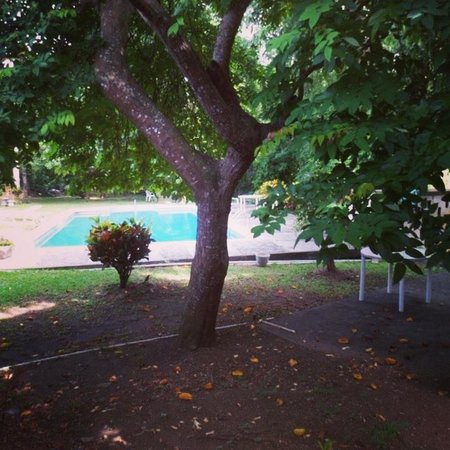 Old Grange Inn: Exotic fruit and gorgeous pool