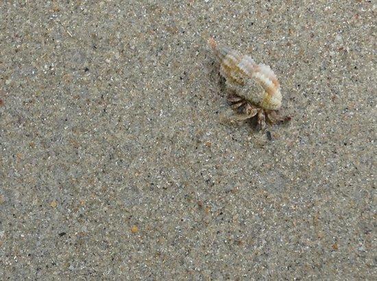 Nirwana Gardens Mayang Sari Beach Resort Hermit Crab On The