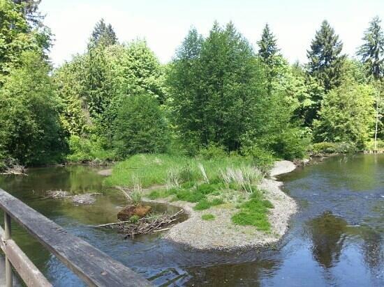 Tumwater Falls Park: view from bridge