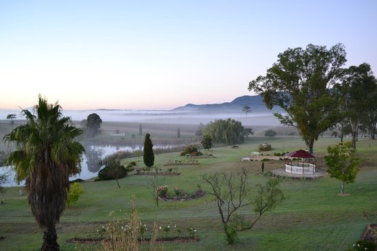 Willow Tree Estate: A foggy morning