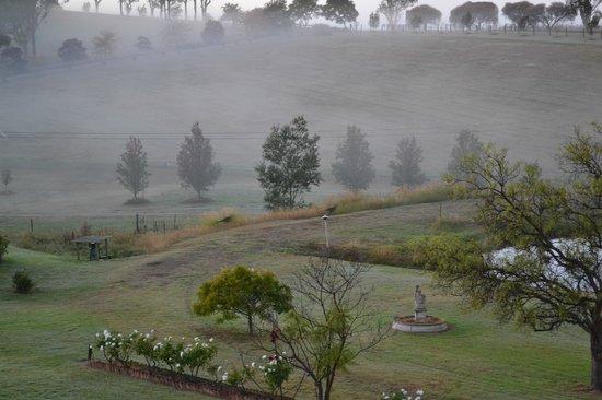 Willow Tree Estate: Kangaroos hopping by in the morning.