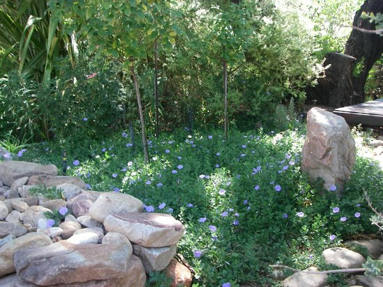Dennehof Karoo Guesthouse: Nicely landscaped side of the breakfast area