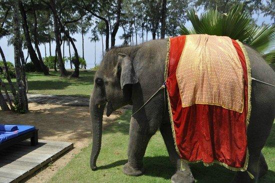 JW Marriott Phuket Resort & Spa: 象のジャンボ