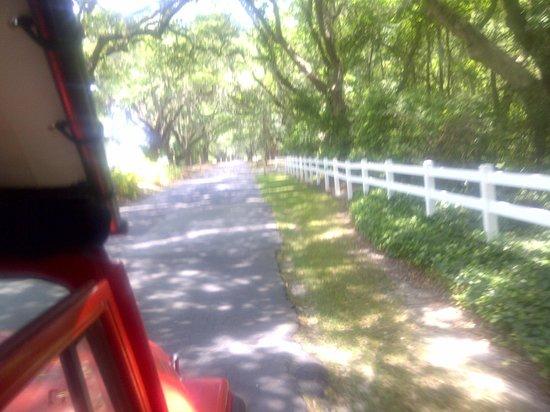 Safari Tours : Grand Oak Entrance to Caledonia (formerly rice) plantation.