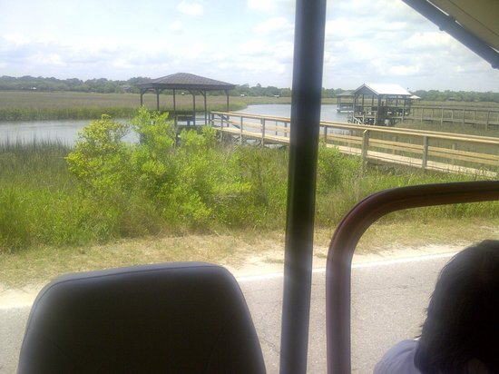 Safari Tours: On Pawley Island.