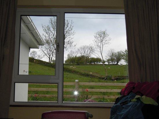 Bayside B&B: pecore al pascolo, questa è la vista dalla camera