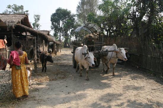 Hotel Parkside: Hotelparkside, chitwan