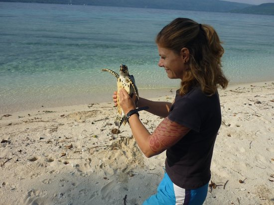 Tranquillity Island Resort & Dive Base: Nadine releasing turtle
