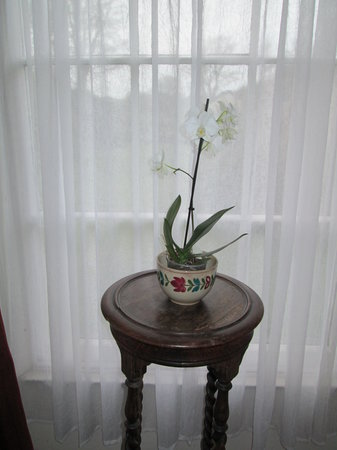 Priskilly Forest Country House with Golf Club: An orchid in our georgian window
