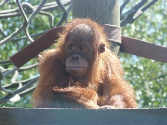Silvestre picture of monkey world wareham tripadvisor monkey world silvestre sciox Images