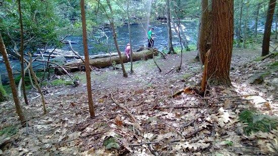 Laurel Hill State Park : Along the creek