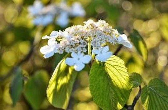 Andon-Reid Inn Bed and Breakfast: Beautiful flowers abound in the Smokies