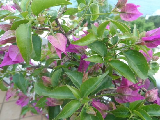 Positano Art Hotel Pasitea: lovely flora