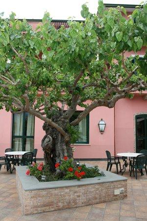 Hotel Villa Sirina: Alter Maulbeerbaum auf der Terasse