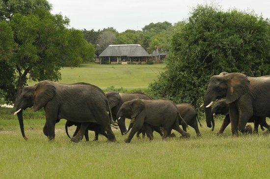 Inyati Game Lodge, Sabi Sand Reserve: Elephants near lodge
