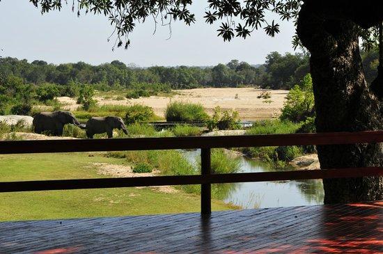 Inyati Game Lodge, Sabi Sand Reserve: Elephants near deck