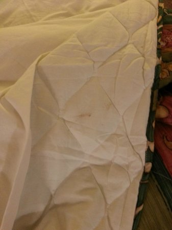 Travel Inn Rockford: One brown streak on comforter, there were several