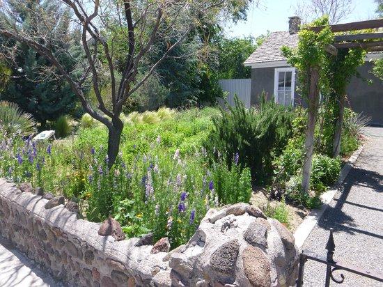 Cochineal: Outside garden