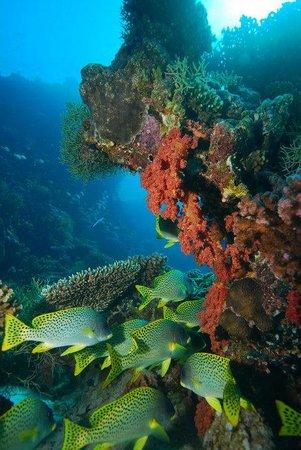 Careless Reef : Carless