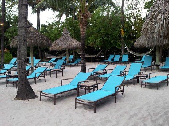 The Palms Hotel & Spa: zona de hamacas de la piscina