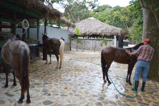 Aqua Village & Spa: stables