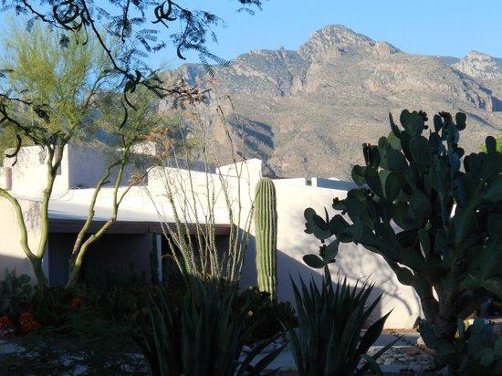 Westward Look Wyndham Grand Resort and Spa: Desert Environment