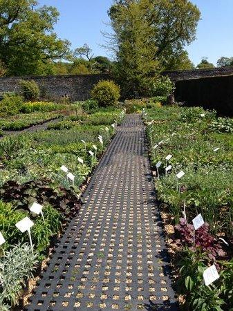 Parham House & Gardens: plant sales