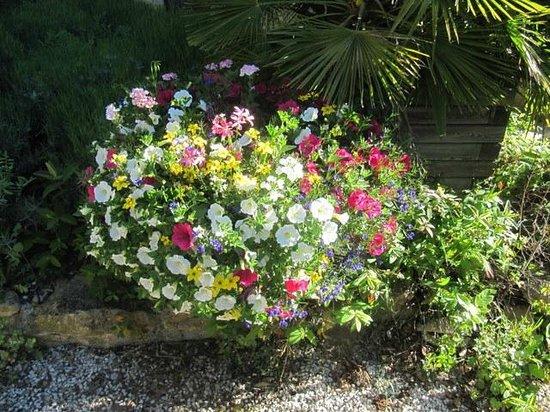 La Ferme : Blumen im Garten von LaFerme